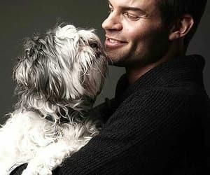 daniel gillies, dog, and The Originals image