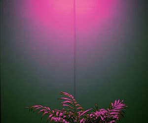 pink, plants, and neon image