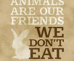 vegan, animals, and veganism image