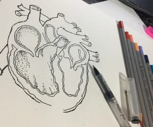 anatomy, drawing, and heart image