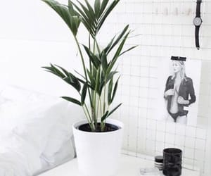 white, plants, and green image