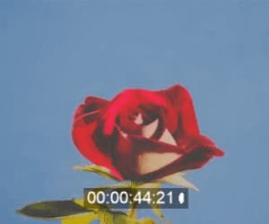 gif, aesthetic, and flower image