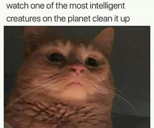 meme, funny, and cat image