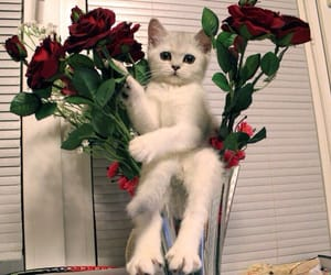 cat, kitten, and rose image