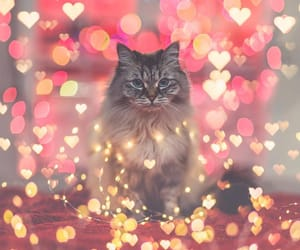 cat, hearts, and lights image
