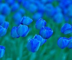 blue, flowers, and tulips image
