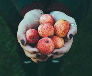 apples, apple picking, and autumn image