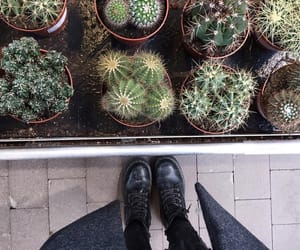 cactus, grunge, and plants image