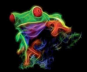 amphibian, colourful, and colours image