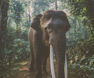 animal, elephant, and jungle image