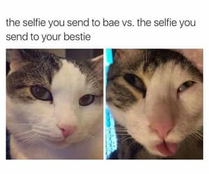 bae, quotes, and bestie image