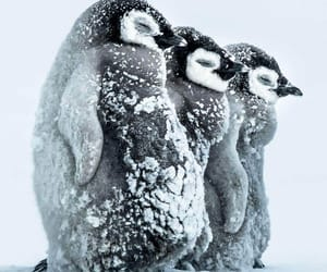 animal, penguin, and winter image