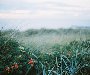 flowers, grass, and nature image