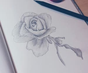 black & white, drawing, and rose image