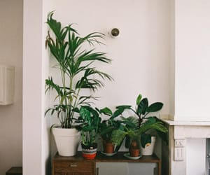 plants, alternative, and indie image