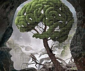 brain and head image