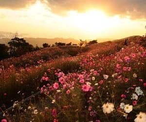 flowers, autumn, and landscape image