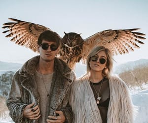 animals, couple, and owl image