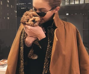 gigi hadid, model, and dog image