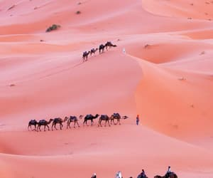 pink, desert, and camel image