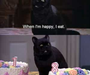 cat, food, and funny image