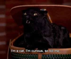 salem and cat image