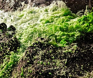 water, aesthetic, and green image