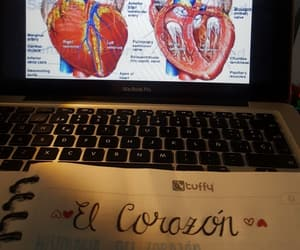 anatomy, college, and heart image