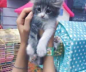 beautiful, cat, and colurs image