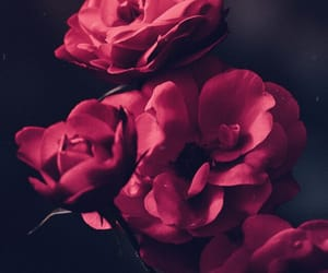 background, dark, and flowers image