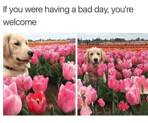 dog, tumblr, and flowers image