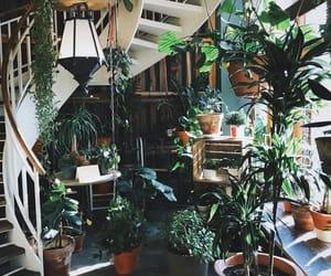 plants, loft, and nature image