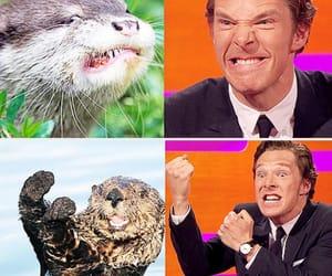 funny, otter, and sherlock image