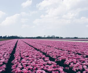 colors, europe, and flowers image
