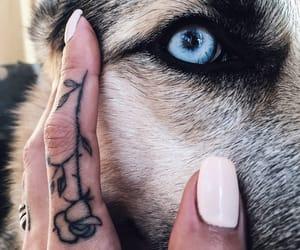 dog, eye, and husky image