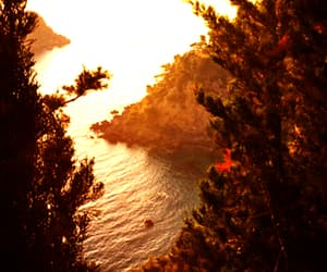nature, forest, and sea image