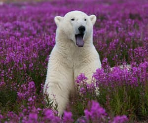 bear, animal, and flowers image