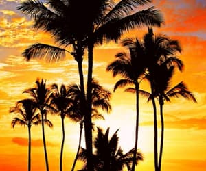 sunset, palm trees, and palms image