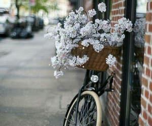 flowers, beautiful, and bike image