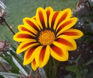 beautifull, flower, and yellow image