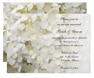 botanical, floral, and white hydrangeas image