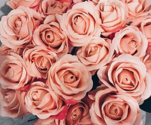 life, pink, and rosa image