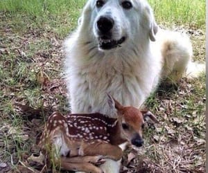 dog, friends, and deer image