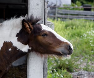 poney and petit cheval image