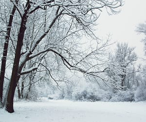 arbre, neige, and hiver image