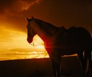 Joey and war horse image