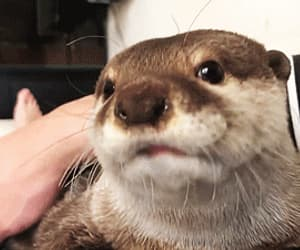 otter image