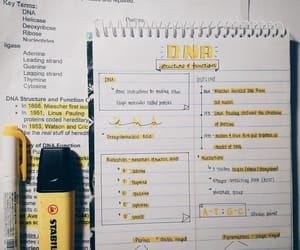 notes, school, and yellow image