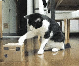 cat, funny, and gif image