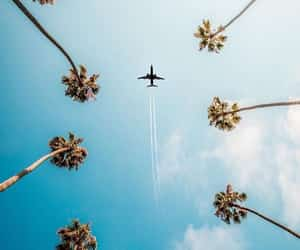 palmtree, plane, and travel image